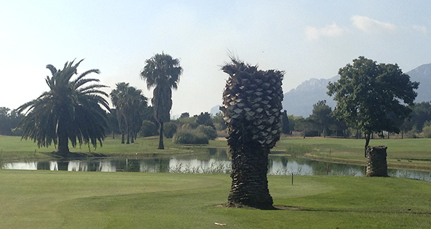 Dead Palm Trees on the Golf Course